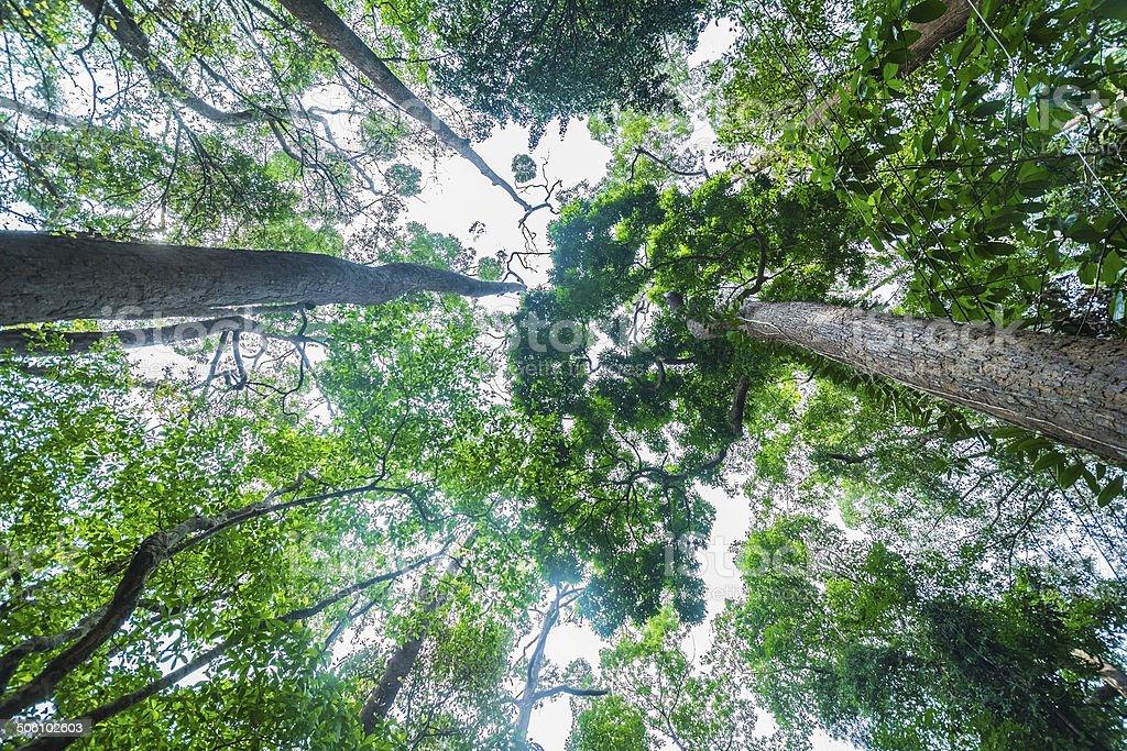 High treetops stock photo