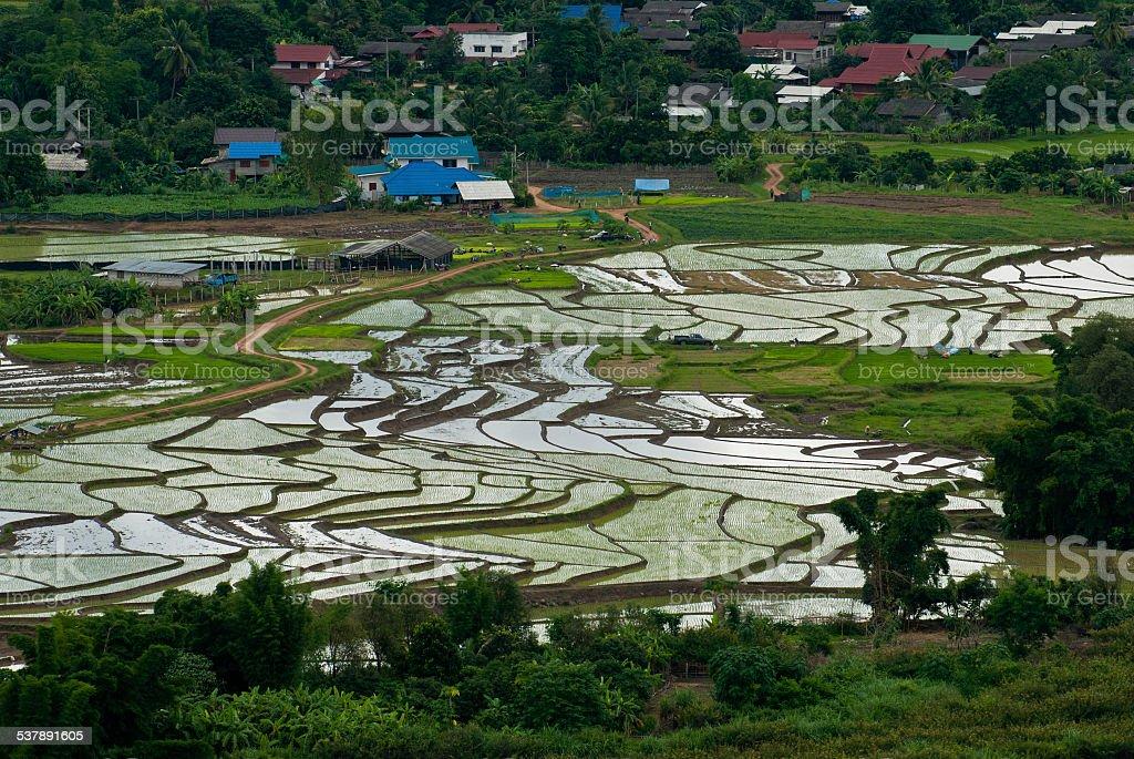 Wysoki widok ryżu taras Mae Chaem, Chiang Mai, Tajlandia zbiór zdjęć royalty-free