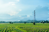 High voltage pole and rice farm with cloudy sky