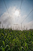 High voltage transmission tower and lines over corn field