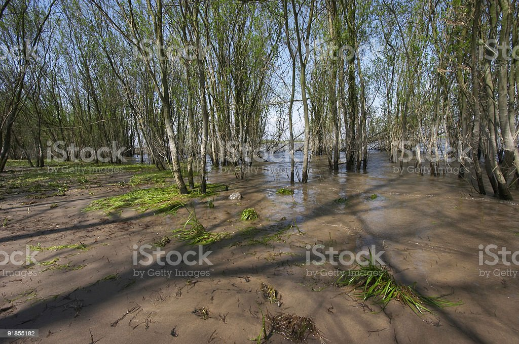 High water and trees stock photo