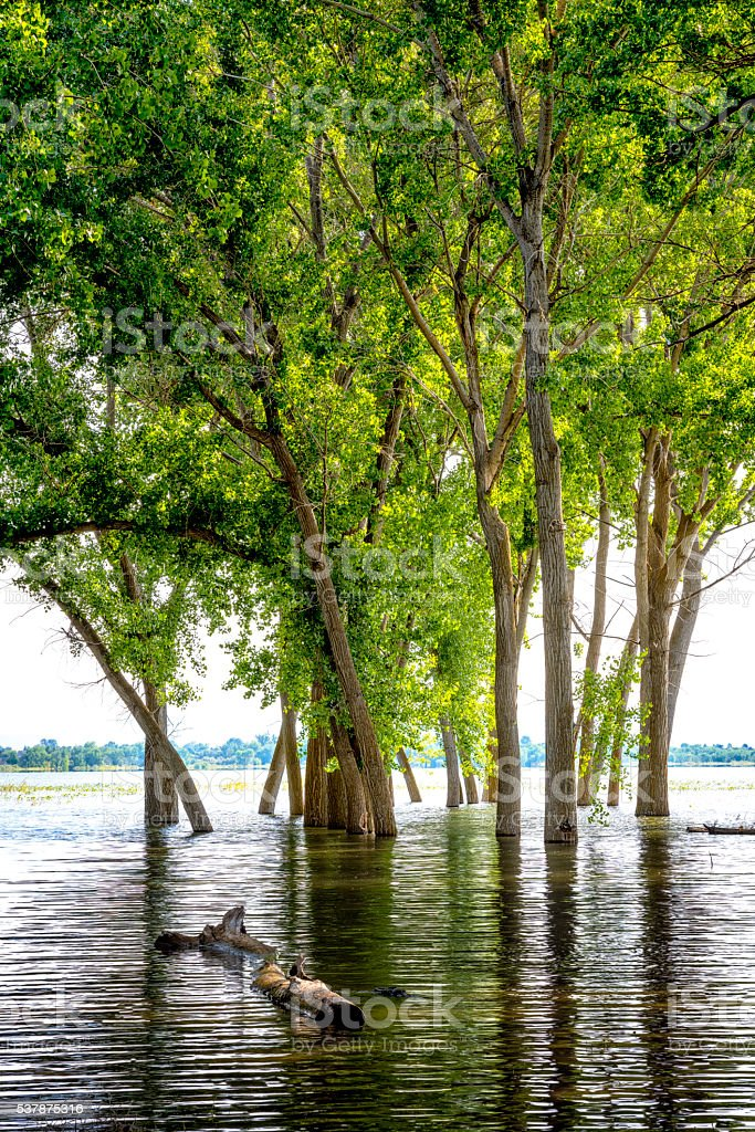High water at Lake Lowell Idaho and flooded trees reflection stock photo