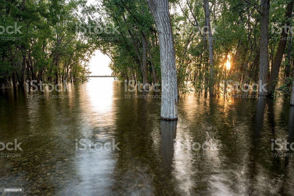 High water flood takes over a forest stock photo