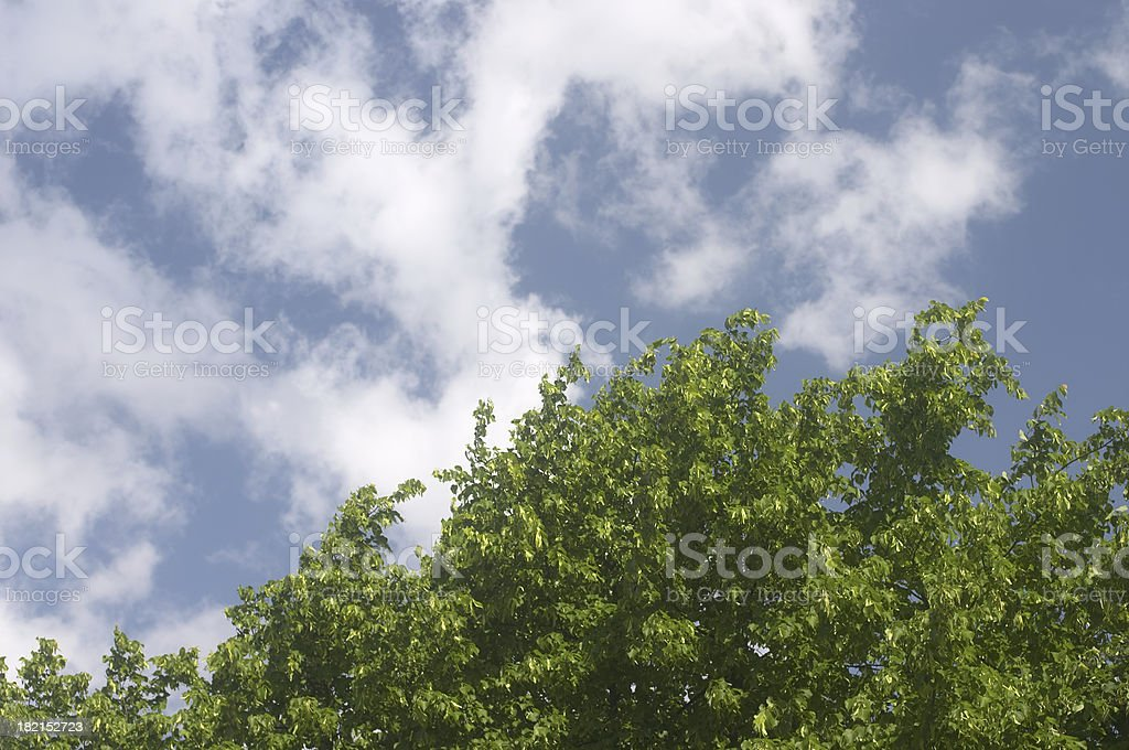Wind-torn clouds on a blustery spring day royalty-free stock photo
