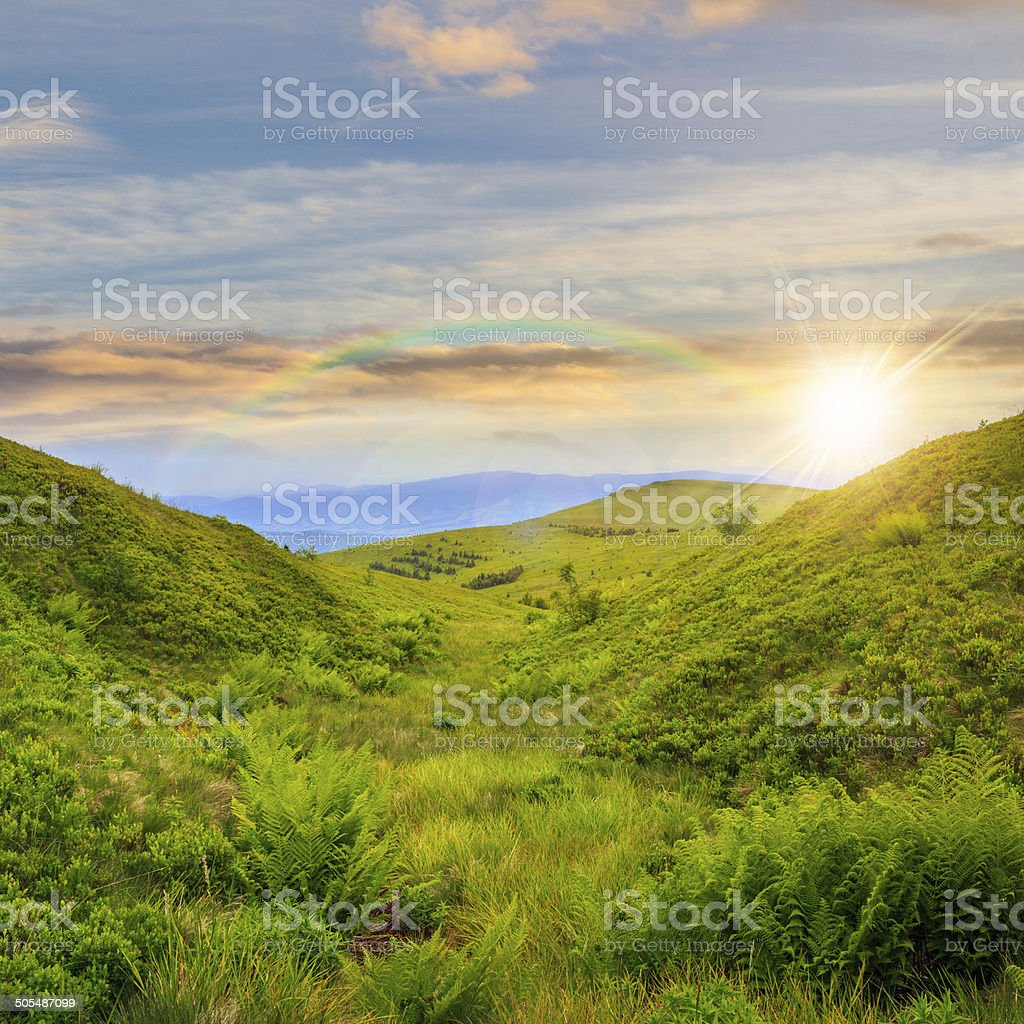 high wild plants in mountain top at sunset stock photo