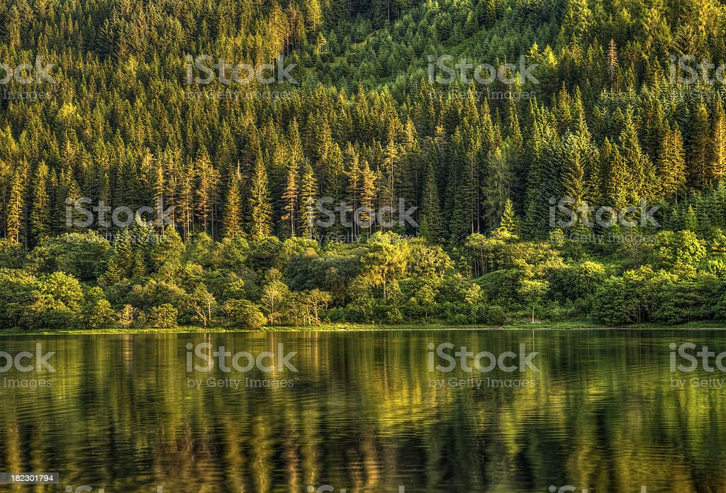 Highland Forest at Sunset royalty-free stock photo