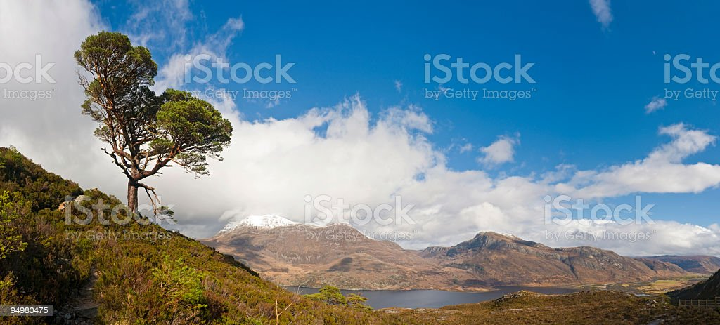 Highland pine Scottish loch stock photo