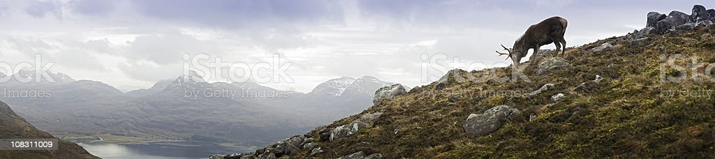 Highland stag overlooking Torridon mountain glen loch wilderness panorama Scotland stock photo