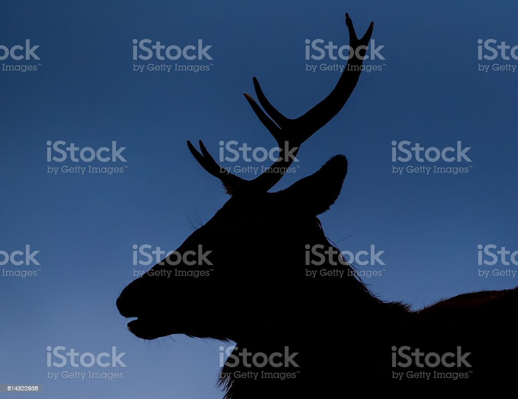 Highland stag silhouette stock photo