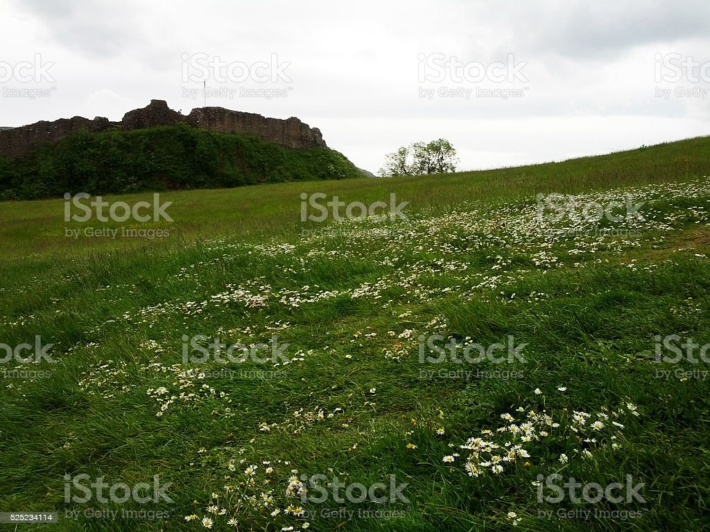 Highlands white daisies meadow, Scotland stock photo