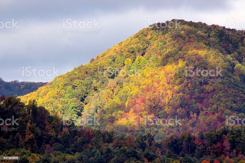 Highlighted fall trees stock photo