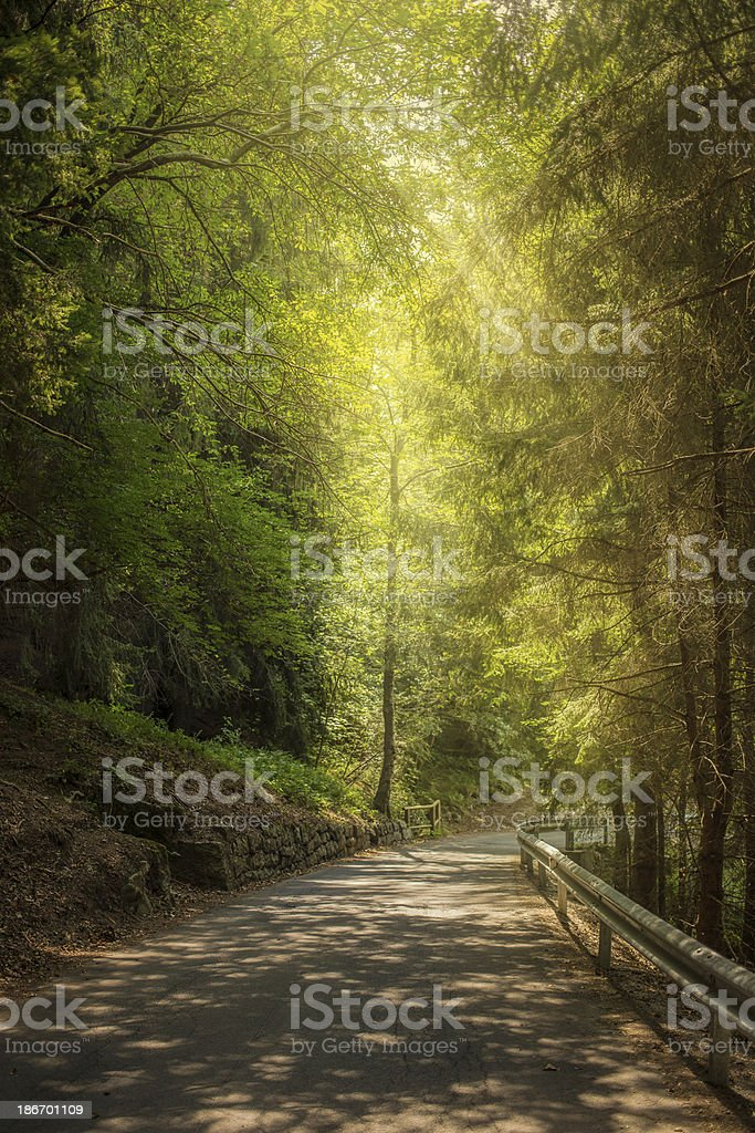 highway in the forest royalty-free stock photo