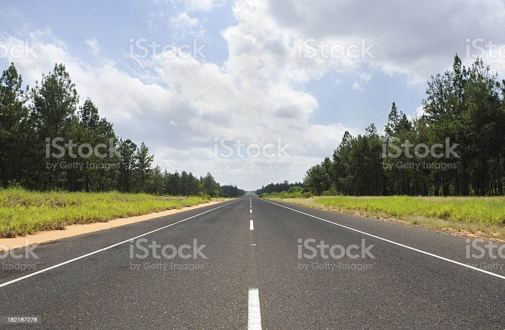 higway in pine forest stock photo