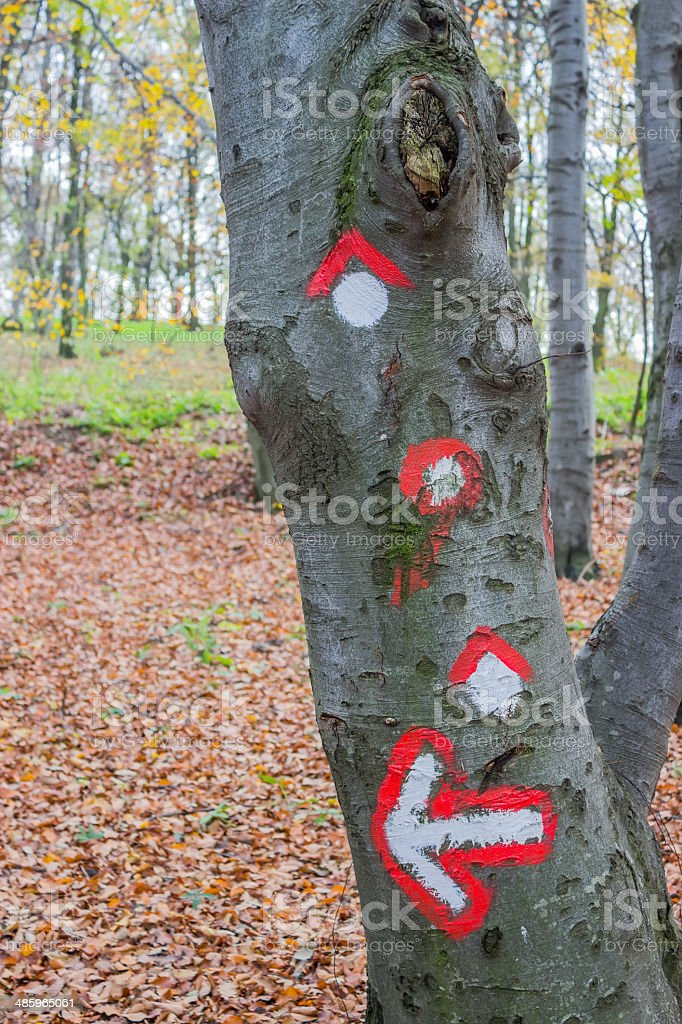 Hike path symbol painted on tree bark royalty-free stock photo