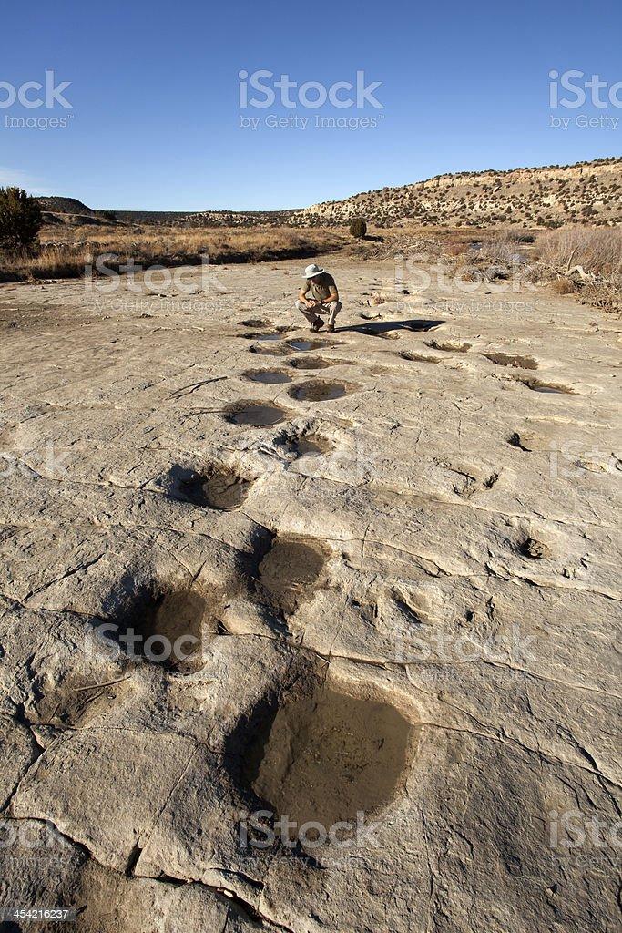 Hiker and huge dinosaur tracksite Colorado stock photo