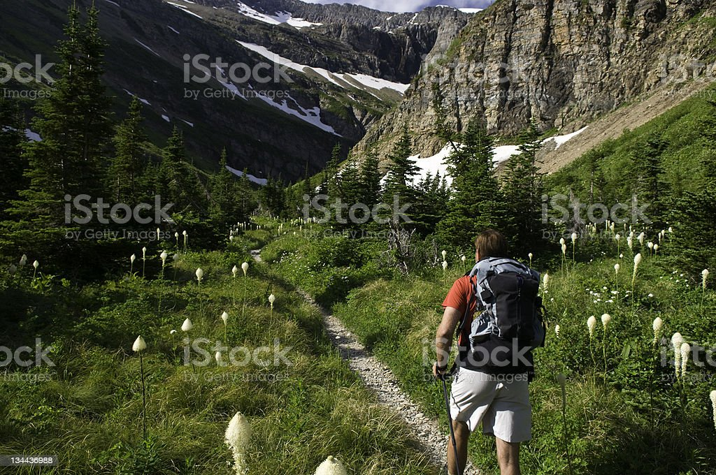 Hiker Enjoys Scenic WIldflower Meadow in Glacier National Park stock photo