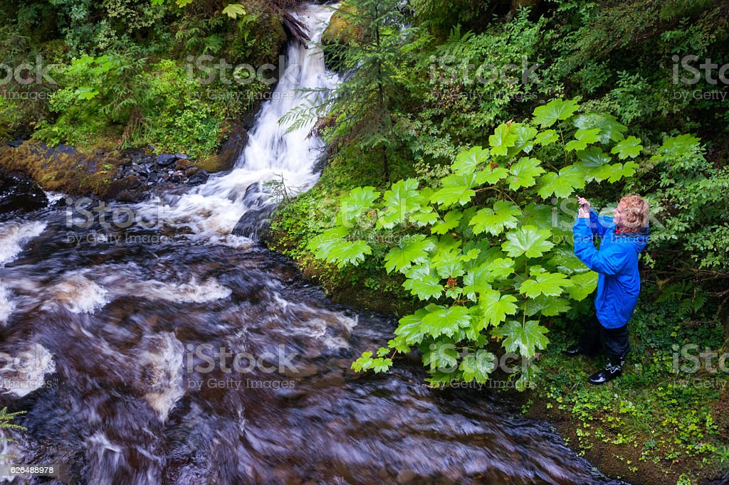 Hiker explores riverbank in rainforest stock photo