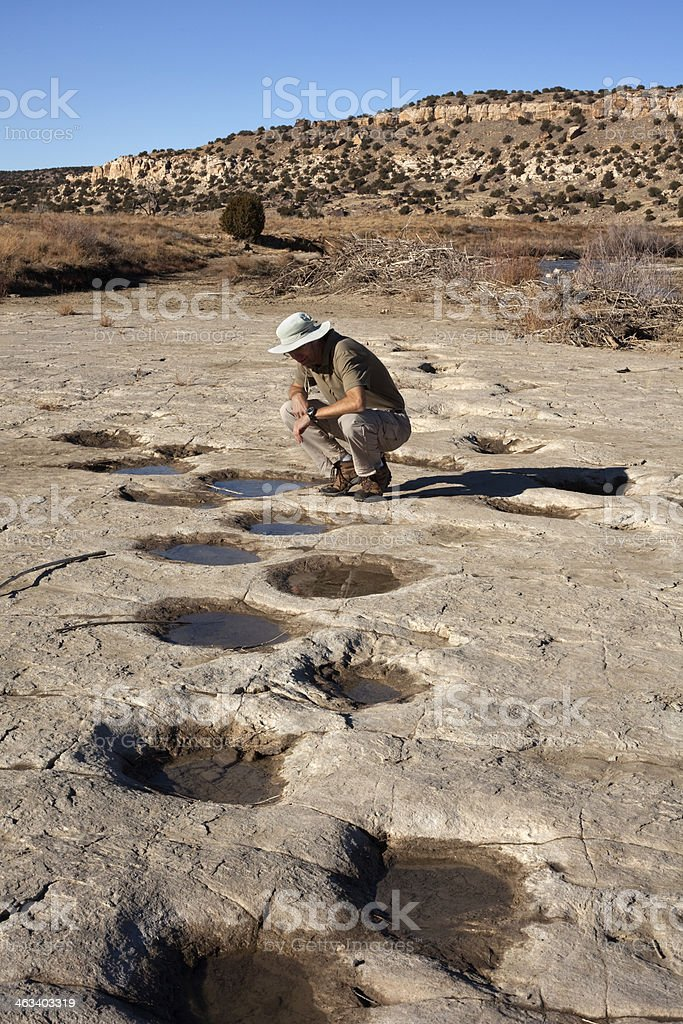 Hiker inspects huge dinosaur tracks Colorado stock photo