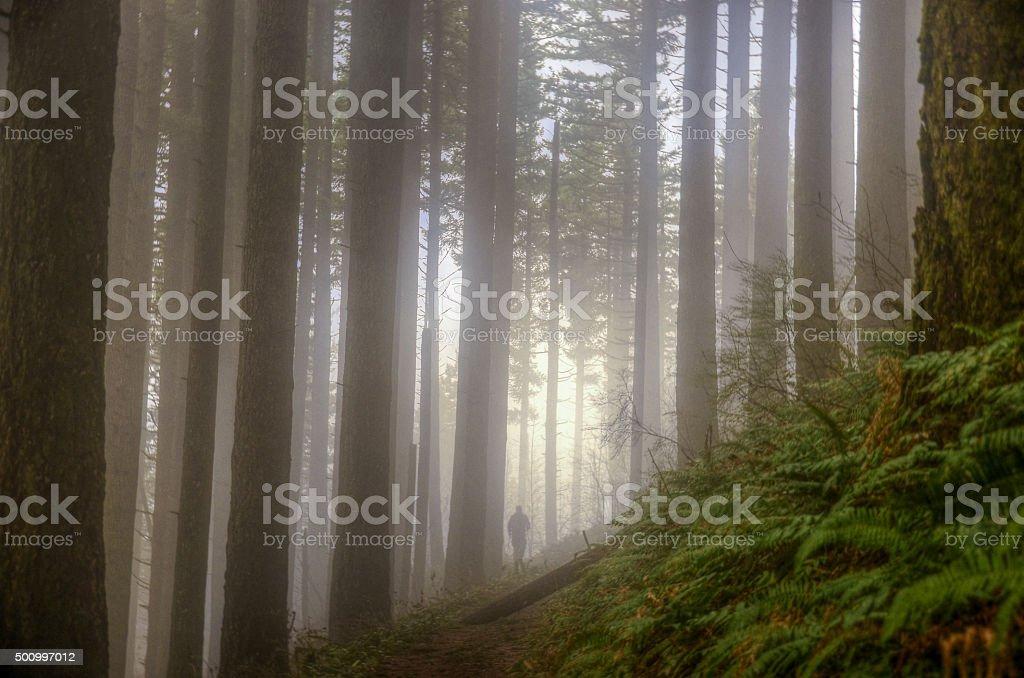 Горные на туман trail в виде деревьев Стоковые фото Стоковая фотография