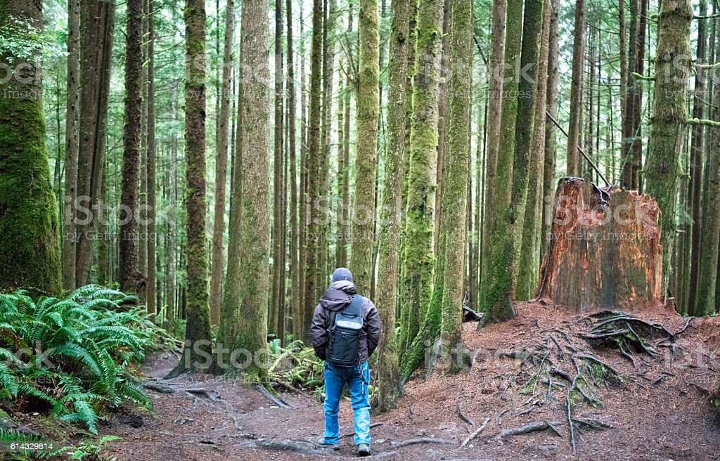 Hiker on the West Coast Trail, BC stock photo