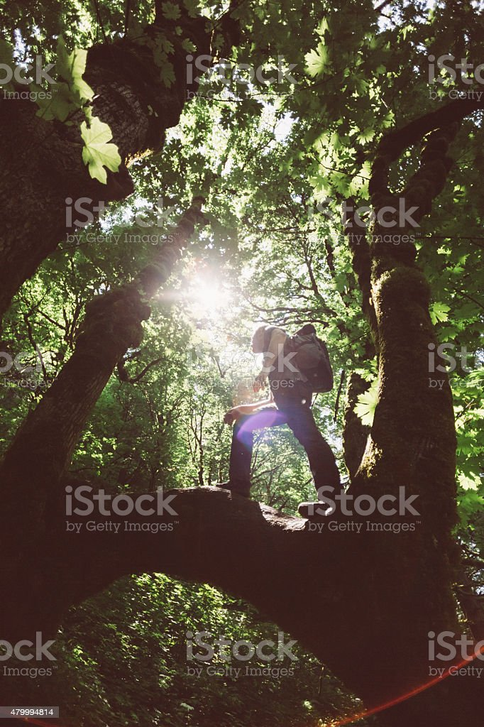 Hiker with backpacking explores the forest stock photo