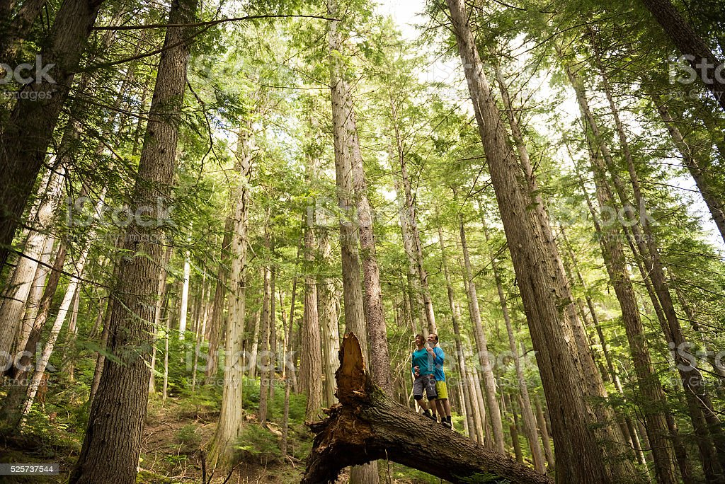 Hikers rejoicing in a temperate rainforest stock photo