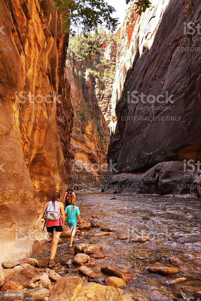 Hiking along the river between canyon walls of Zion Narrows. stock photo
