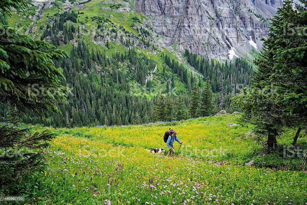 Hiking Among Beautiful Wildflowers and Mountain Scenery stock photo