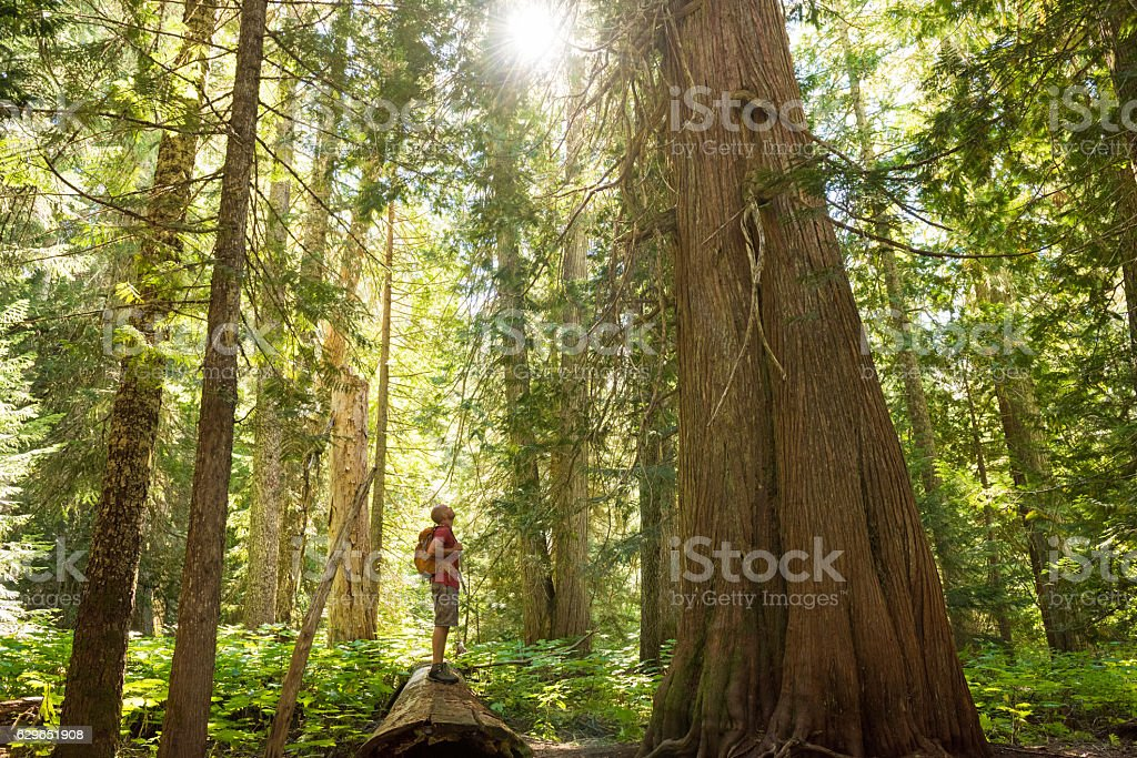 Hiking in a temperate rainforest stock photo