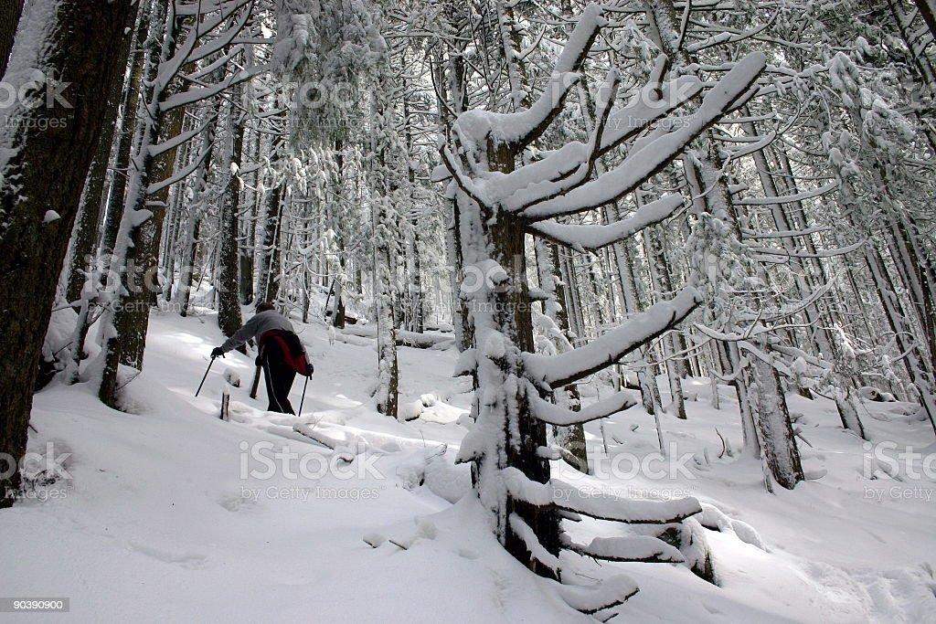 Hiking In A Winter Wonderland royalty-free stock photo