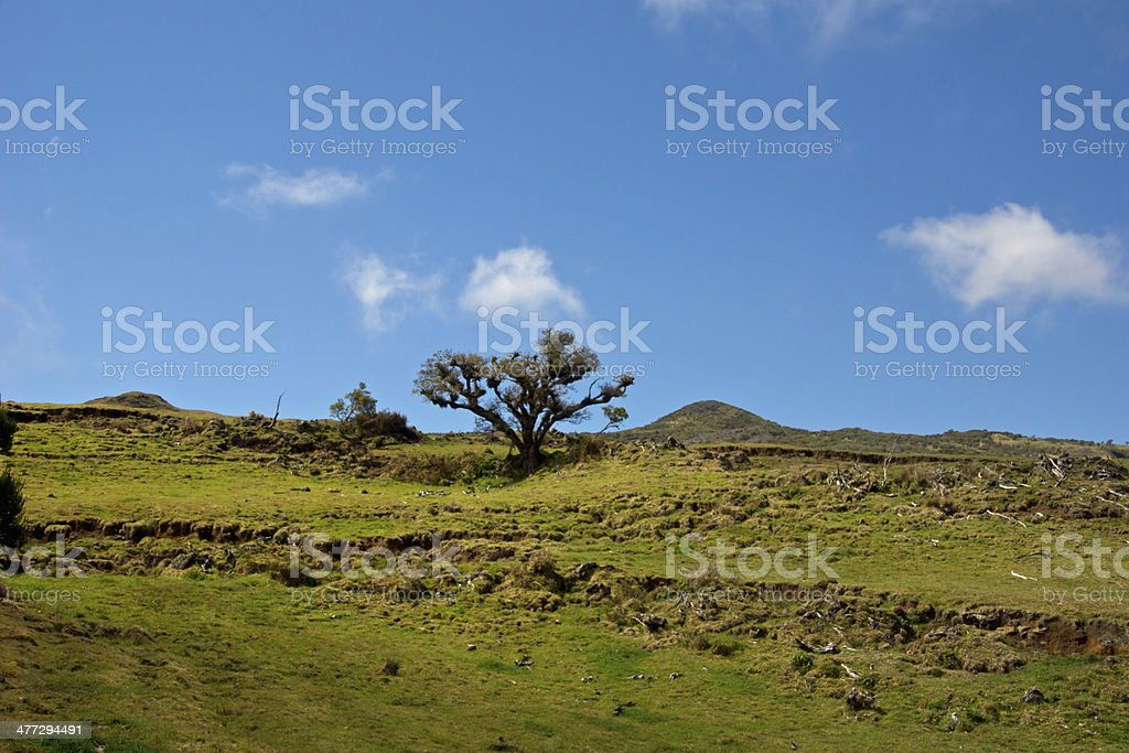 Hiking in Reunion royalty-free stock photo
