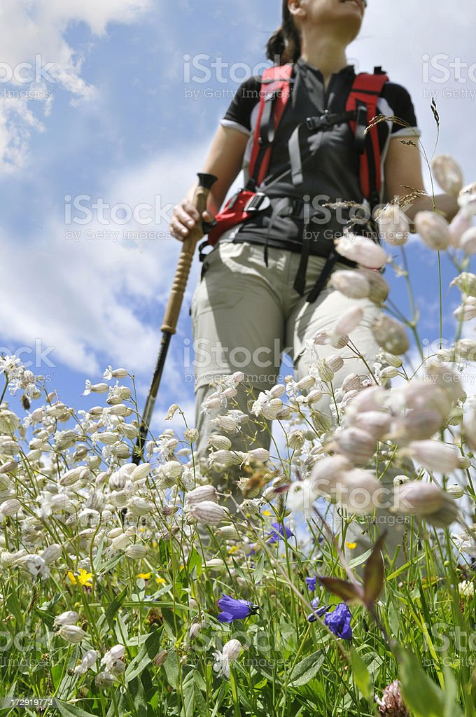 hiking in the Alps flowers royalty-free stock photo
