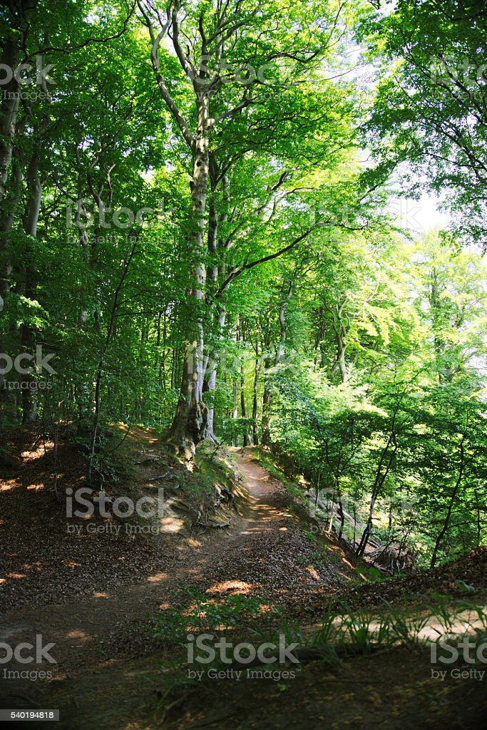hiking path in national park Jasmund stock photo