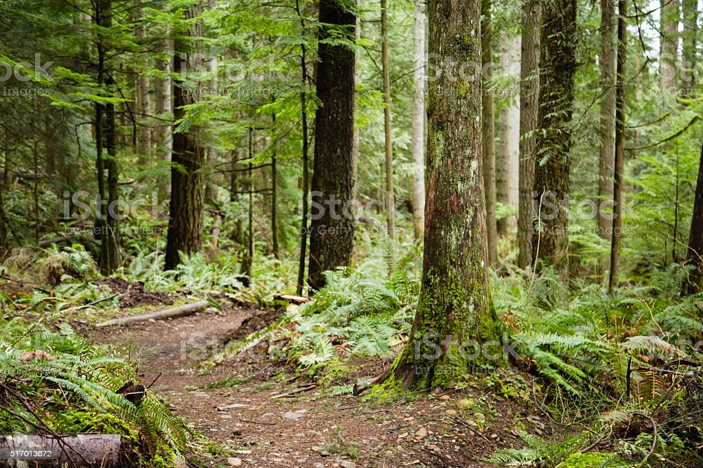 Hiking Path in the Cascade Mountains stock photo