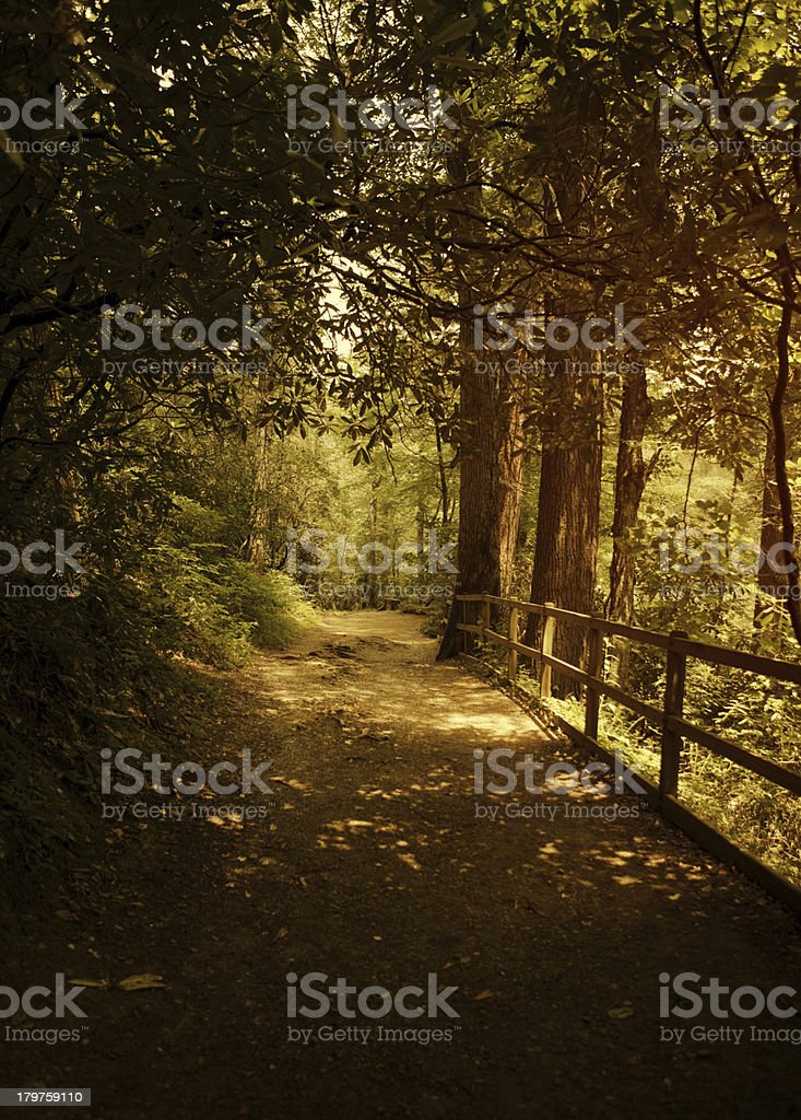 hiking path in the forest stock photo