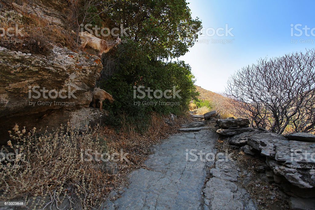 Hiking path of Cyclades island stock photo