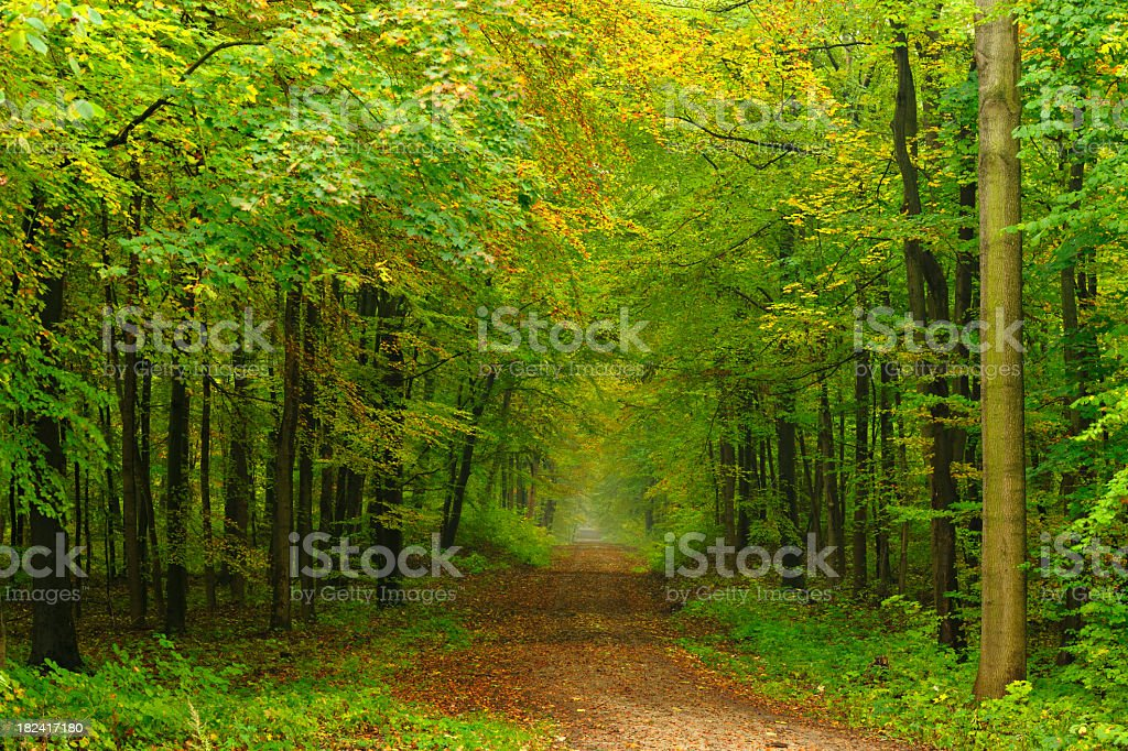 Hiking Path through Mixed Deciduous Forest in Early Autumn royalty-free stock photo