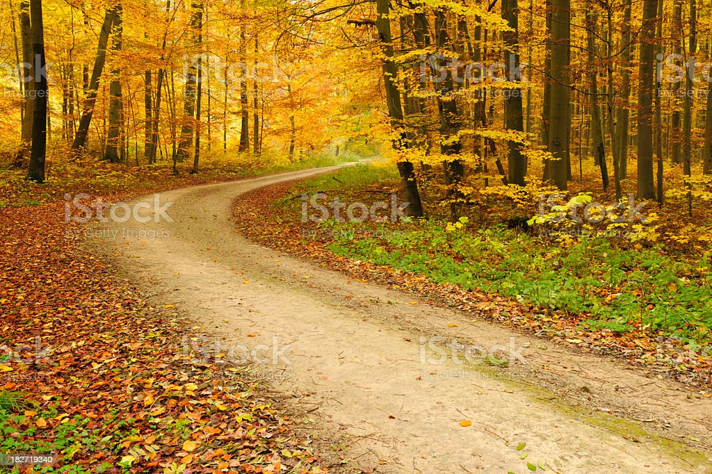 Hiking Path through Mixed Deciduous Tree Forest in Autumn royalty-free stock photo