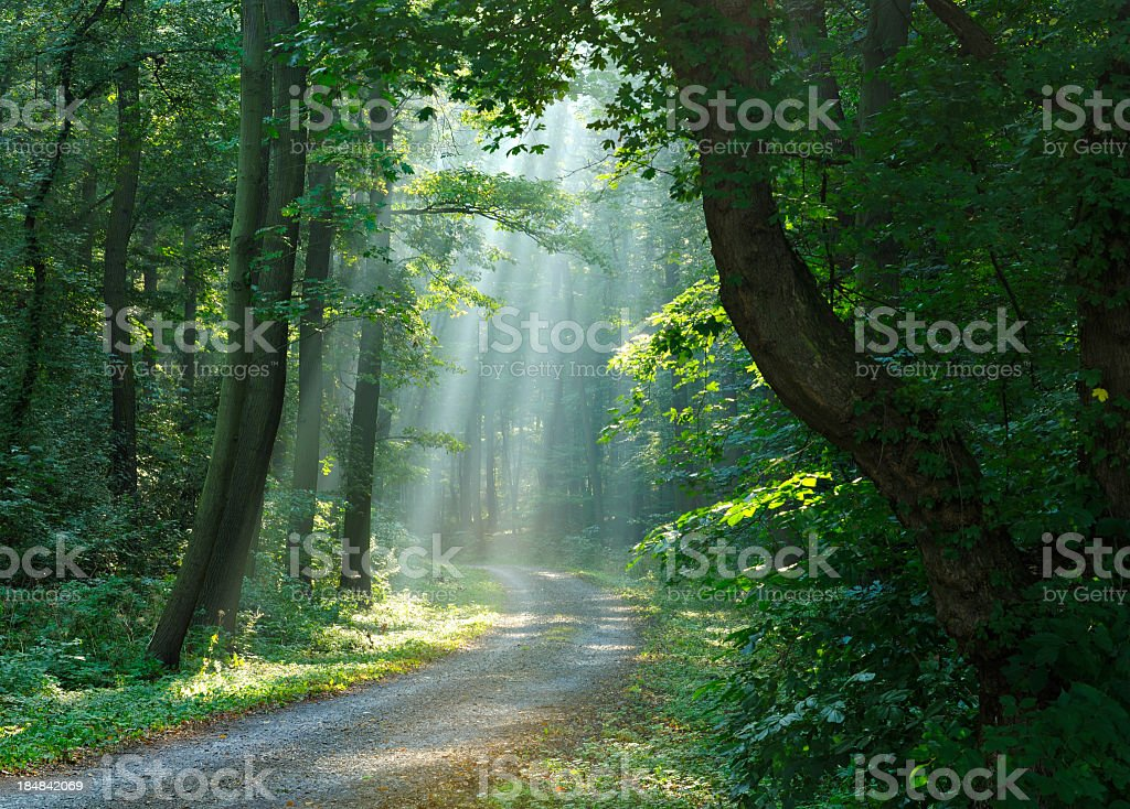 Hiking Path through Mixed Deciduous Tree Forest with Sunrays stock photo