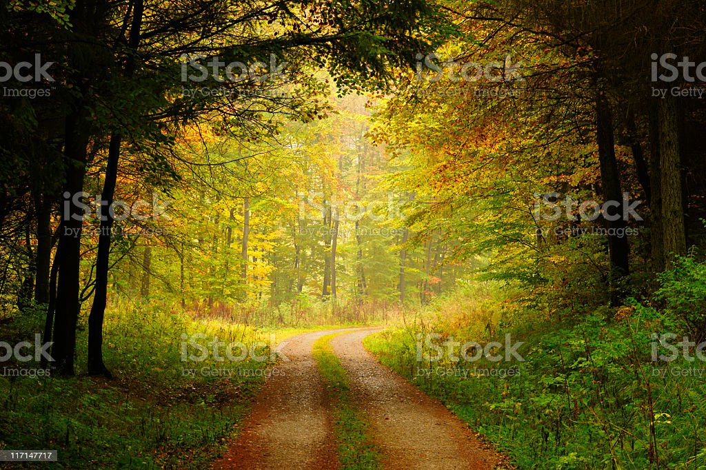 Hiking Path through Mixed Tree Forest in Autumn royalty-free stock photo