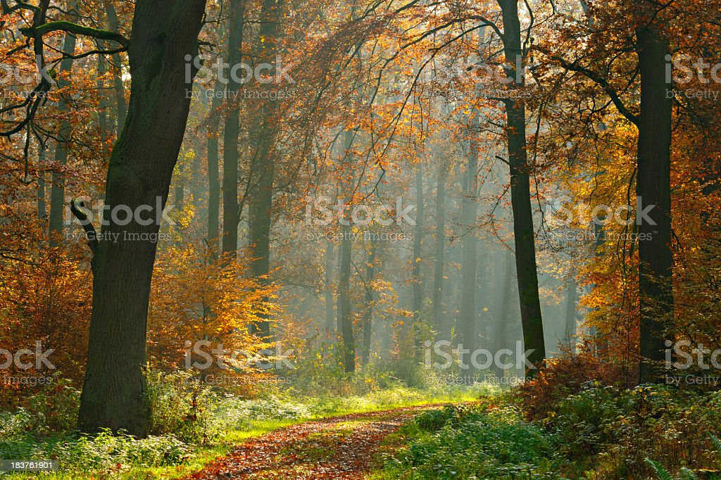 Hiking Path through Mixed Tree Forest with Sunrays in Autumn royalty-free stock photo