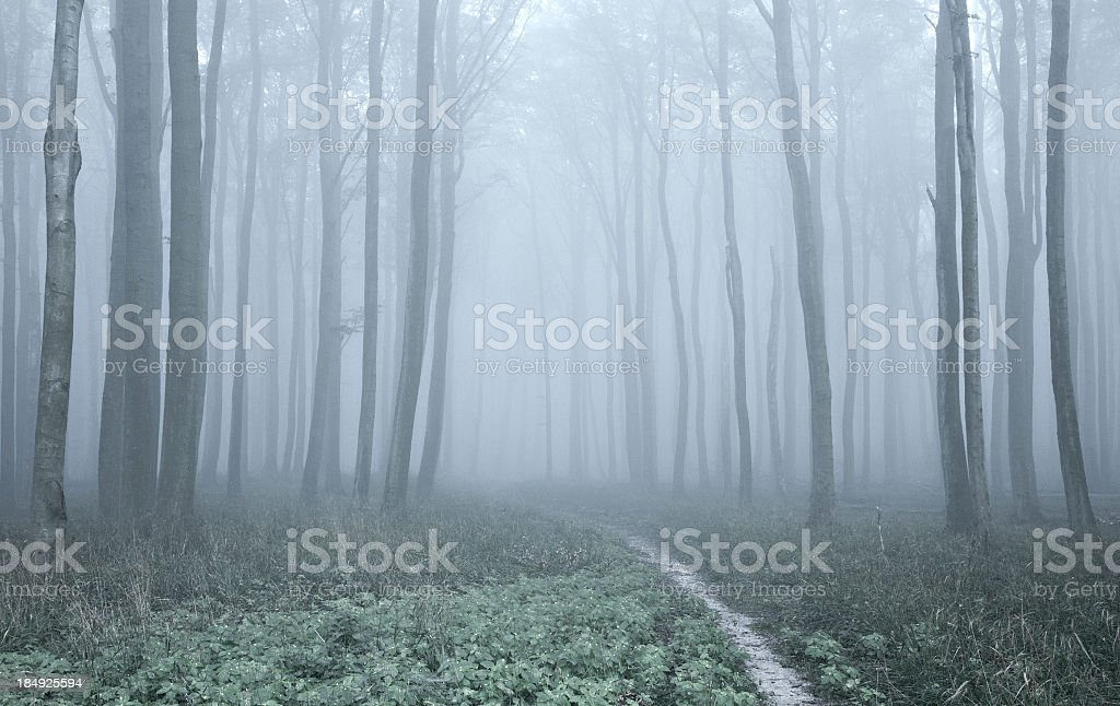 Hiking Path through Spooky Misty Forest of Old Beech Trees stock photo