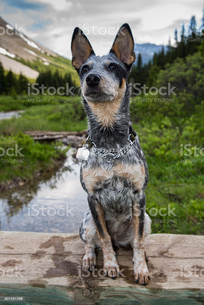 Hiking Puppy stock photo