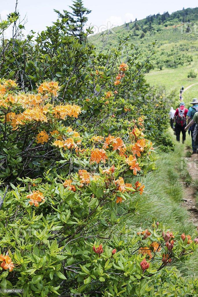 Hiking the Appalachian Trail stock photo