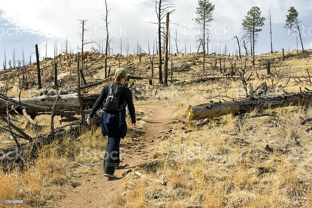 Hiking Through a Burned Forest royalty-free stock photo