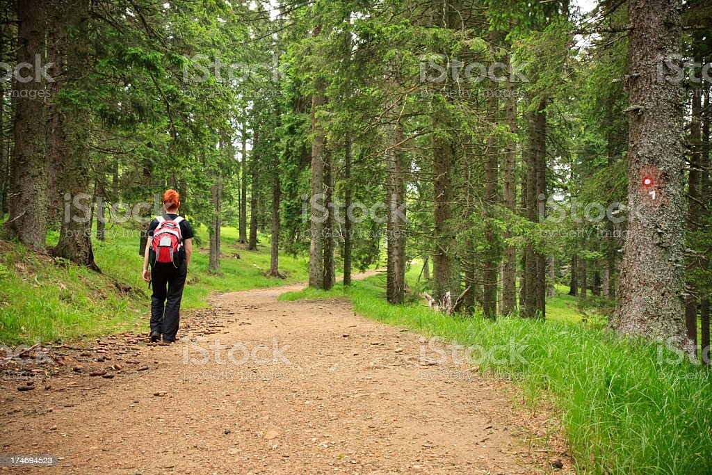 Hiking through forest royalty-free stock photo