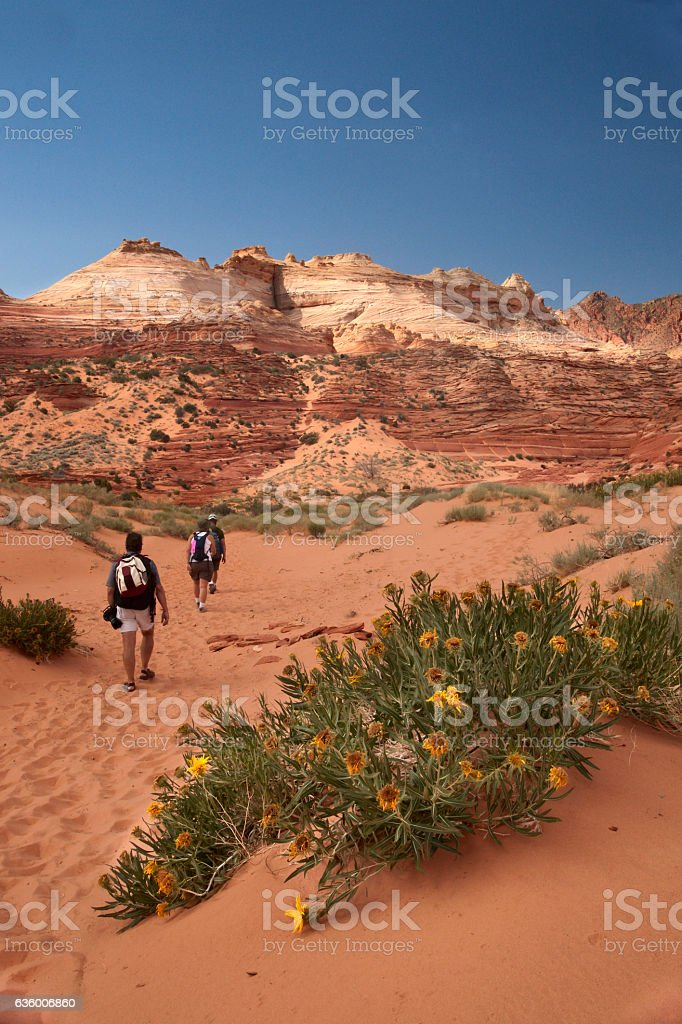Hiking through red sand to the Wave stock photo