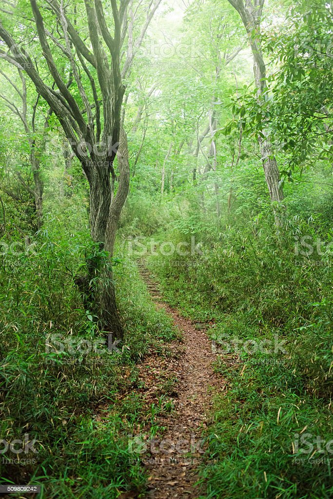 Hiking trail in a forest stock photo