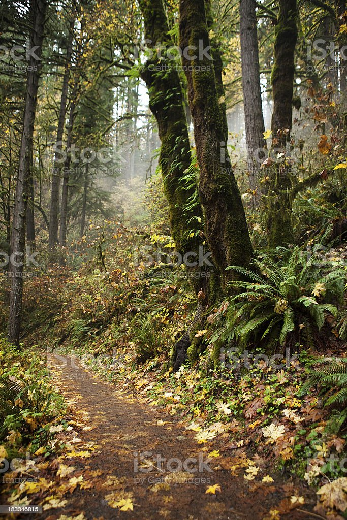 Hiking trail in autumn royalty-free stock photo