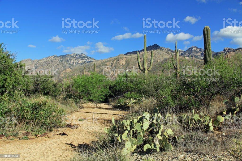 Hiking Trail in Bear Canyon in Tucson, AZ stock photo